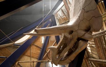Terra Nova series. Triceratops .jpg